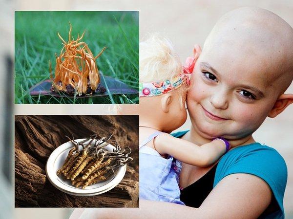 Đông trùng hạ thảo tốt cho bệnh nhân ung thư