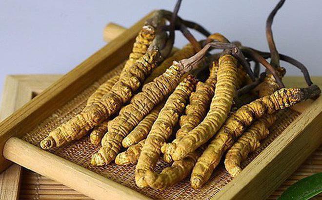 Cách dùng Đông trùng hạ thảo Tây Tạng nguyên con để bồi bổ sức khỏe