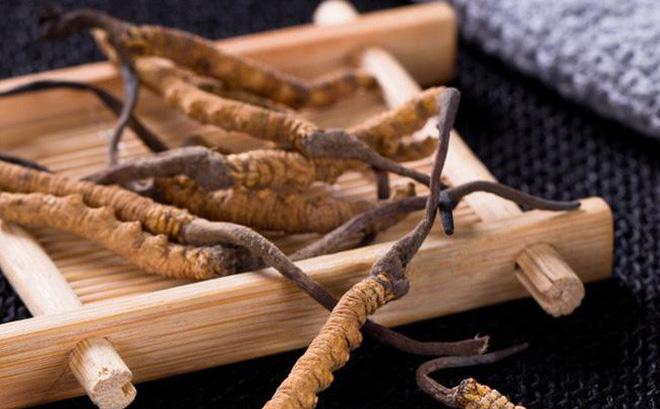 Tác dụng tốt của đông trùng hạ thảo với sức khỏe