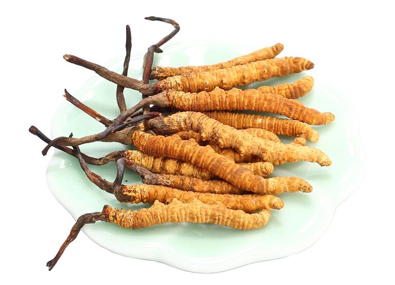 Đông trùng hạ thảo – Món quà sức khỏe cho ngày tết